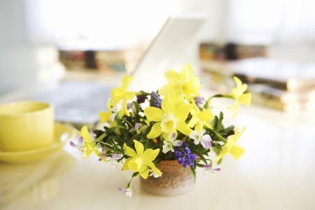 Narcissus and viola flowers 版權商用圖片