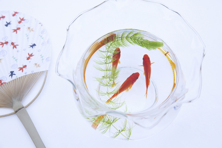 waterweed: Fan and goldfish
