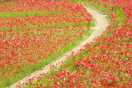 grime: The road is surrounded by poppy