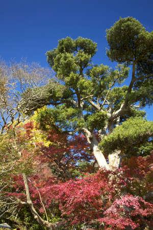 kamakura: Autumn in Kamakura