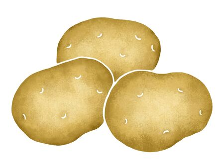 tuber: Potato Stock Photo