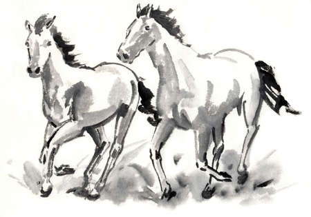 living organism: Horse Stock Photo