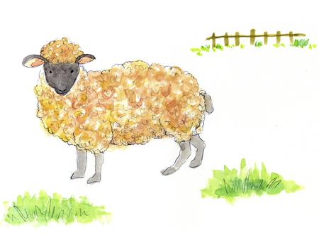 romney: Sheep