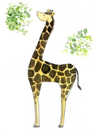 mottle: Giraffe