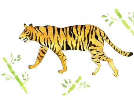 loitering: Tiger