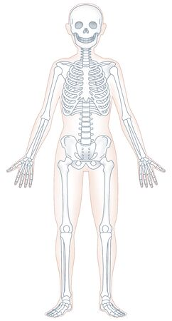 oriental medicine: Human skeleton model Stock Photo