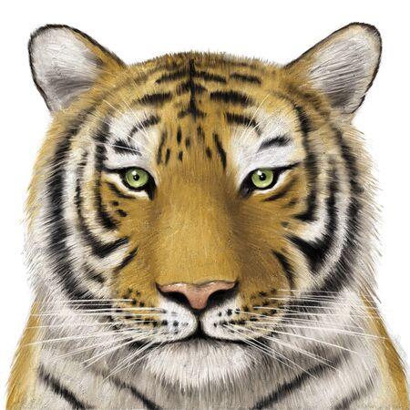 beast creature: Tiger