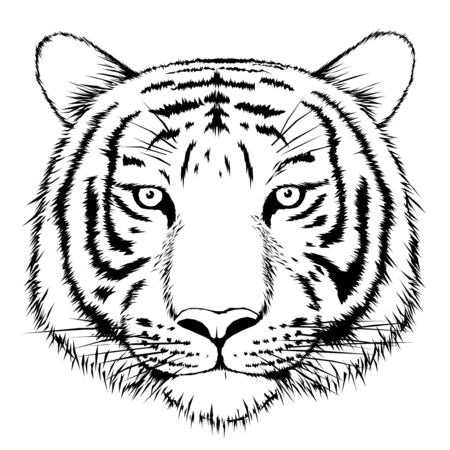carnivore: Tiger