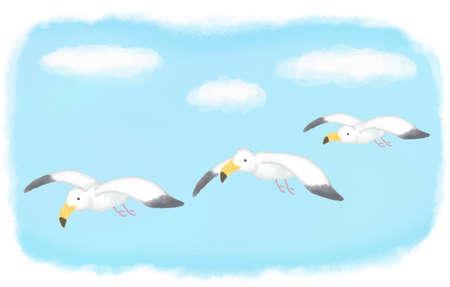 gull: 3 Sea Gull