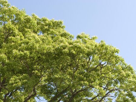 reviving: Fresh green leaves and blue sky