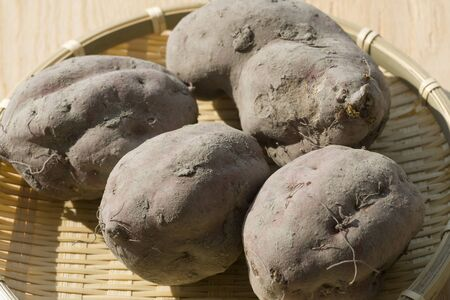 arrived: Sweet potatoes arrived in soil Stock Photo