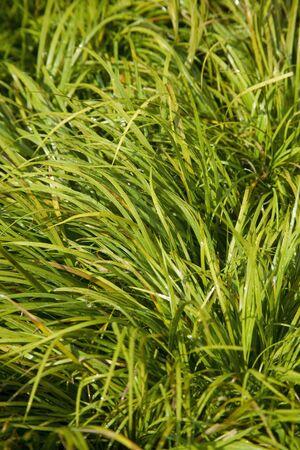 nishinomiya: Aquatic plants