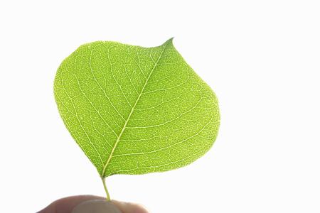 hygenic: Leaf