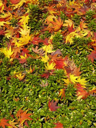 mowed the autumn leaves