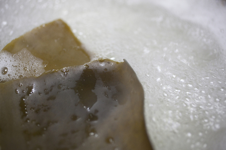 alga marina: Sin embargo algas