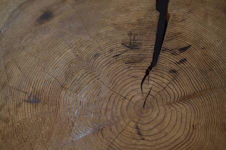 crazing: Treering Stock Photo