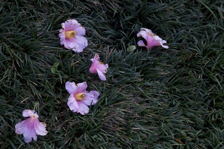sabi: Petals fallen camellia