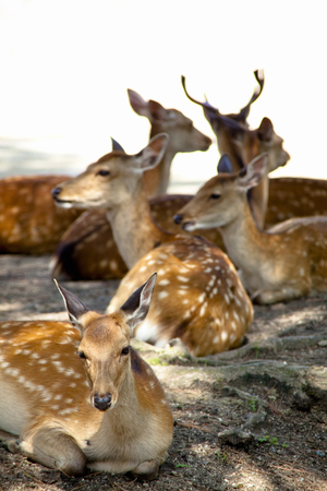 animal only: NARA Park deer Stock Photo