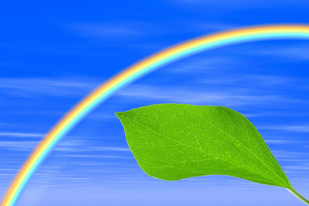 cg: Rainbow and the fresh green of CG