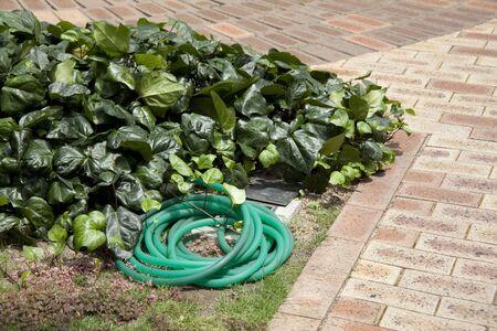 horticultural: Horticultural watering hose