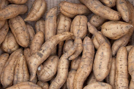 anno: Osamu Yasushi potatoes