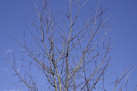 suggest: Tree branches suggest winter
