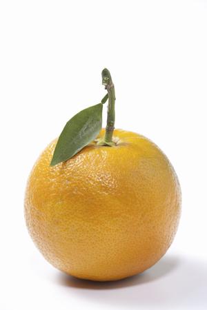 citrus aurantium: Citrus aurantium