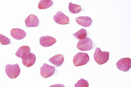 花びら: ツバキ サザンカの花びら
