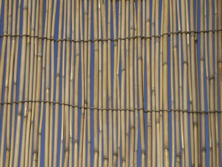 leaning against: leaning against the reed screen Stock Photo