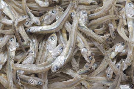dried: Dried sardines