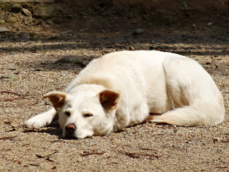 watchdog: Watchdog to take a nap