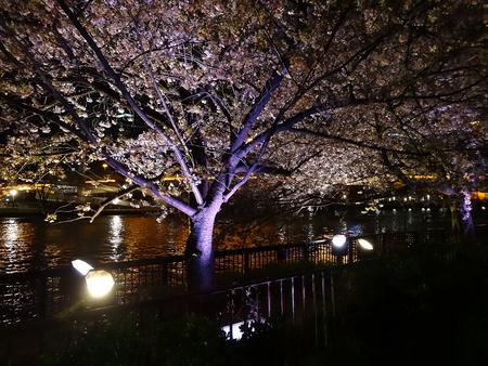 light up: Sakura accende Archivio Fotografico