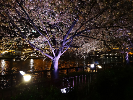 lightup: Sakura light up