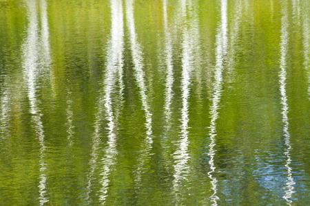 緑の池の表面 写真素材 - 47144628
