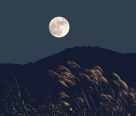 the pampas: Japanese pampas grass and moon Stock Photo