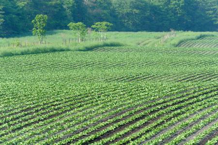 farm implements: Hokkaido countryside Stock Photo