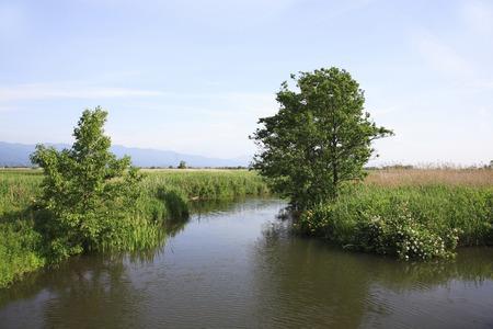 waterweed: Fukushimagata, Niigata Prefecture