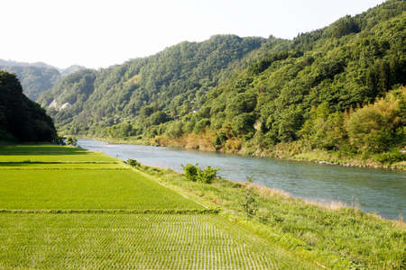 paddies: Rice paddies and the Sai River