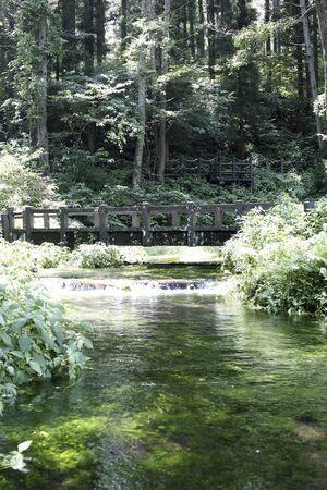 green park: Himekawa headwaters spring