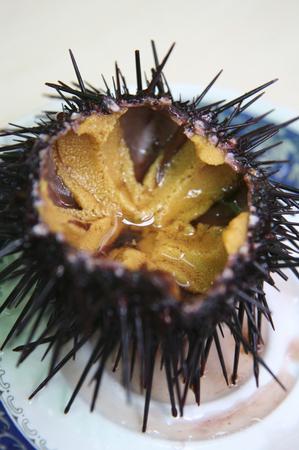 urchin: Purple sea urchin Stock Photo
