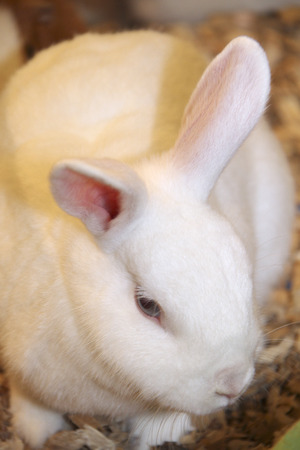 living things: Rabbit