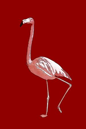 retouch: Flamingo Stock Photo