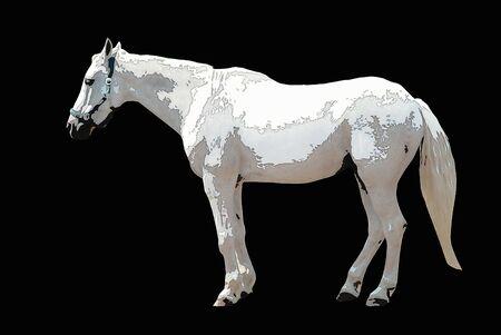 pastures: White horse