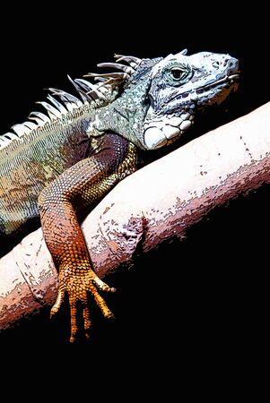 retouch: Iguana