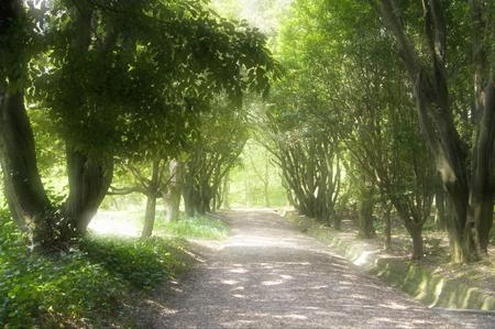 treelined: Green tree-lined road Stock Photo