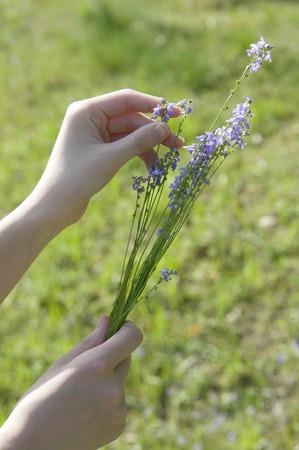 picking: Picking flowers