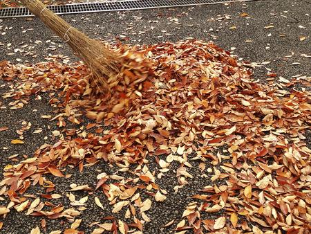 きれいな葉は、公園での落ちた