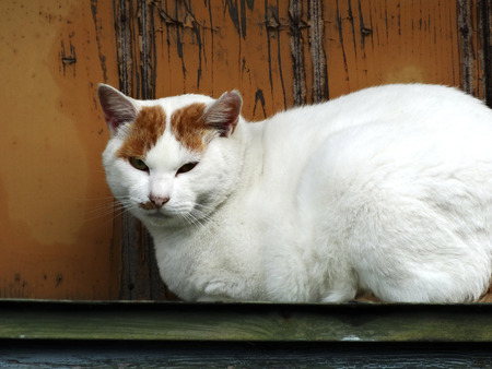 eaves: Cat of the eaves of the house