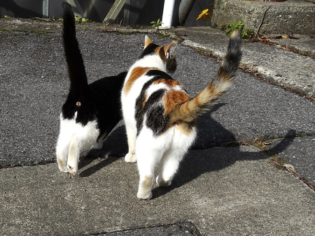 frolic: Pet cats frolic on the road Stock Photo