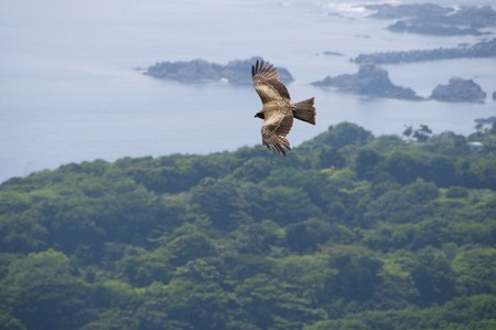 animal kite: Kite Stock Photo